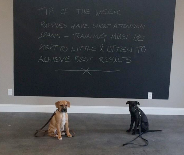 dog-classes-2-pups