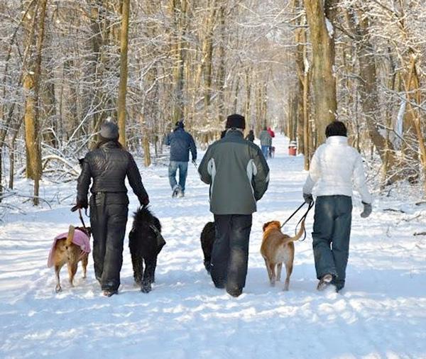 dog-walk-snow