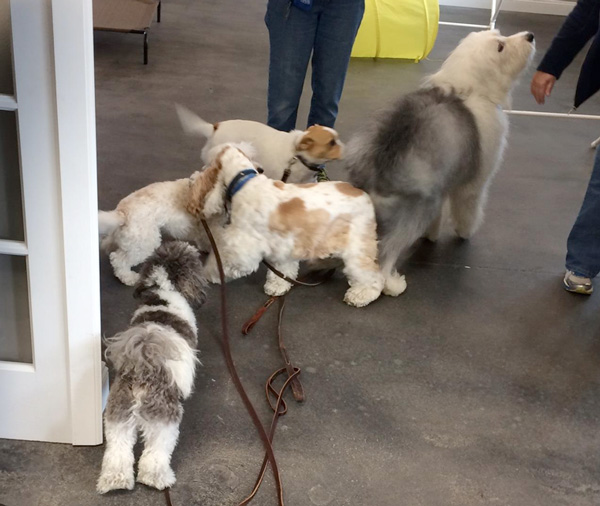 puppy-socialization-excitement