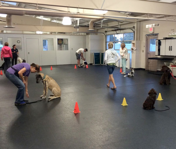 puppy-training-class