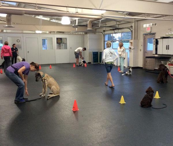 puppy-training-class