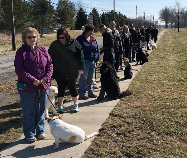 walk-and-train-dog
